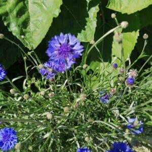 Kräuter&Blüten